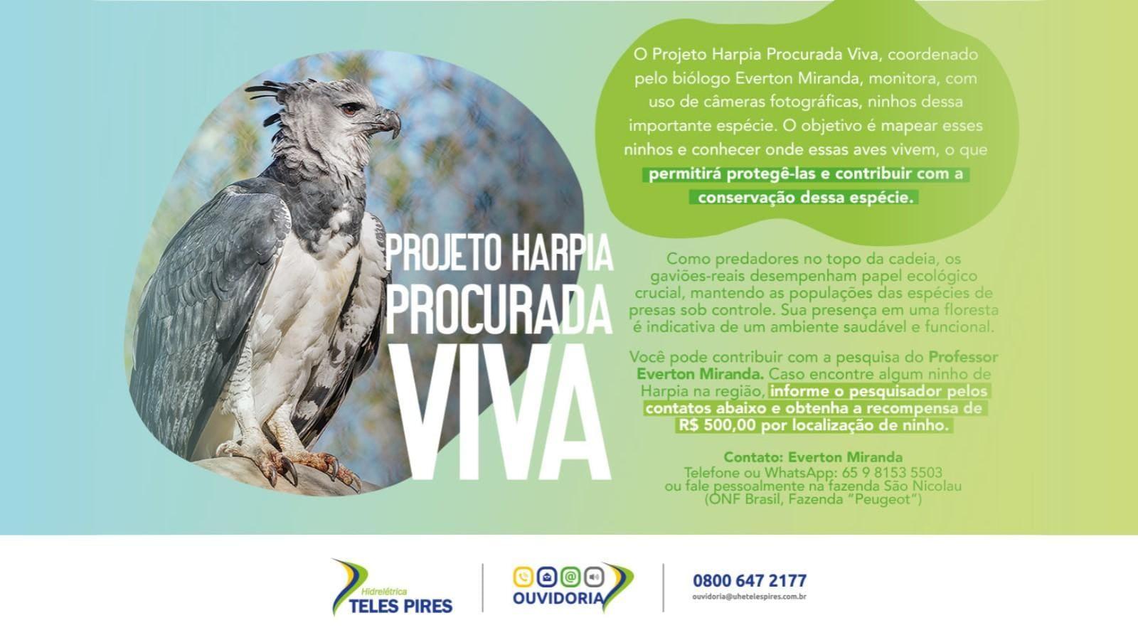 Projeto Harpia Procurada Viva